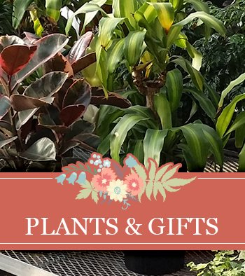 Plants and Gifts